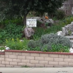 Suburban permaculture, Diamond Bar, California