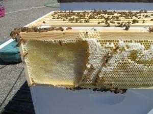 Bryan kids bees 5