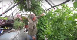 Urban aquaponics: Small Scale High Value Efficient Local Agriculture
